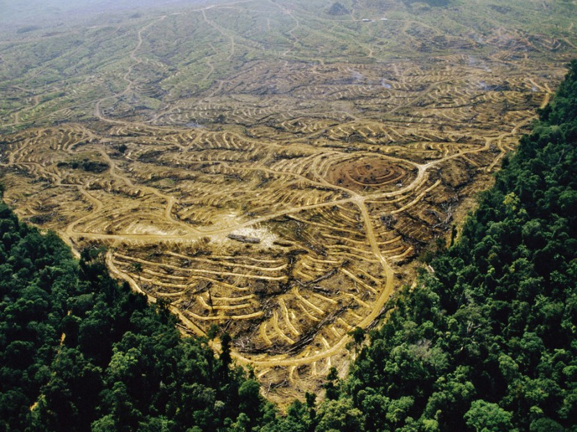 Sabah, Malaysia --- Aerial view of a clearcut rainforest which will become an oil palm plantation. --- Image by © Frans Lanting/Corbis